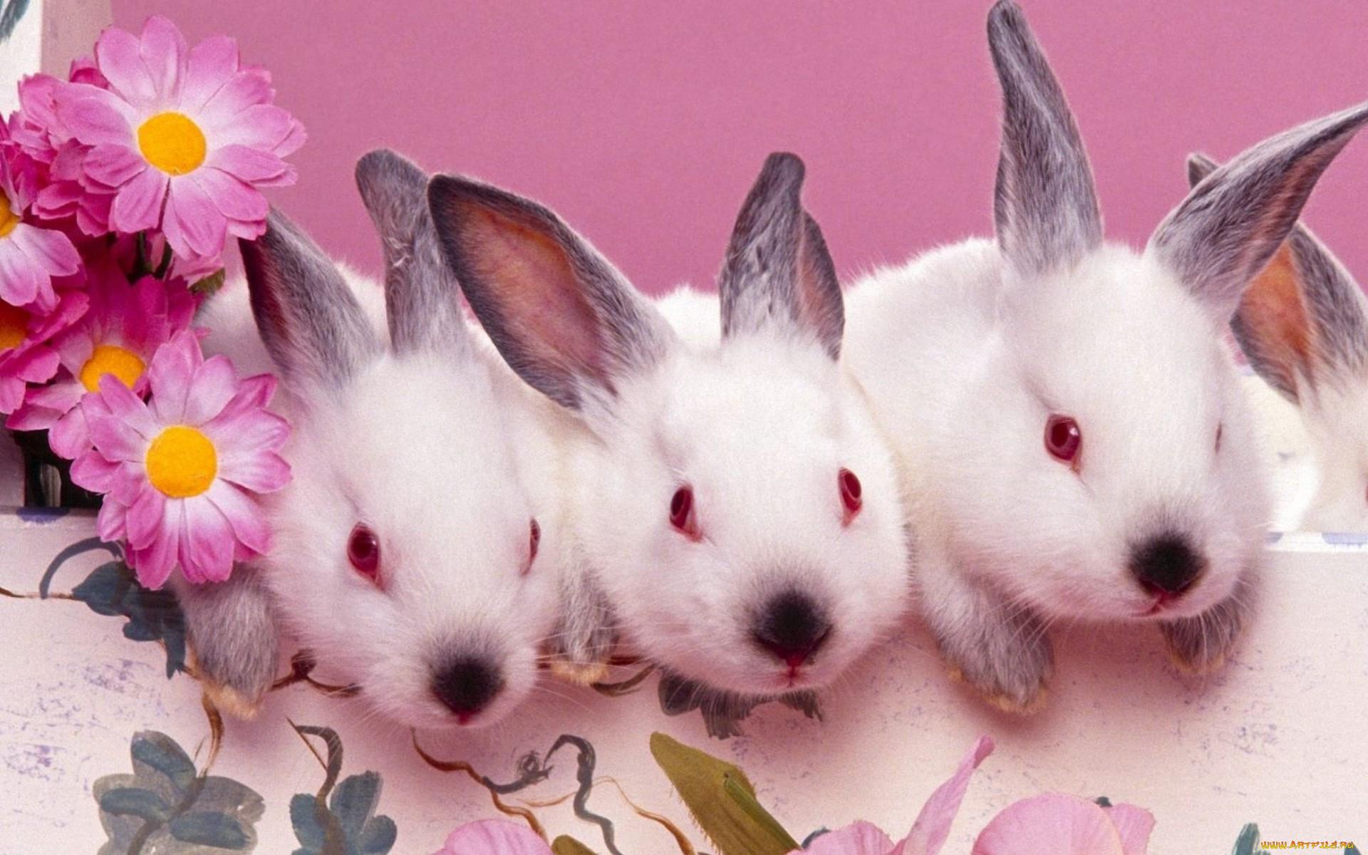 движущиеся картинки с кроликами спину, прямые руки